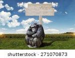 Chimpanzee Arms Crossed ...