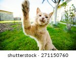 Stock photo funny red haired cat doing selfie 271150760
