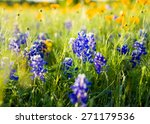 Texas Bluebonnets And...