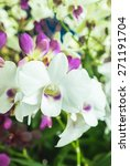 orchid flowers   selective...   Shutterstock . vector #271191704