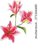watercolour lilies  scalable...   Shutterstock .eps vector #271266680