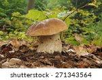 Small photo of Boletus edulis (English: cep, penny bun, porcino, or king bolete, usually called porcini)