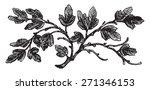 The Barren Fig Tree  Vintage...