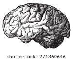 the brain  vintage engraved... | Shutterstock .eps vector #271360646