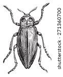 borer  vintage engraved... | Shutterstock .eps vector #271360700