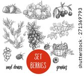 Sketches And Engravings Berries ...