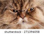 Portrait Of A Sad Cat