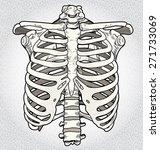 ribcage | Shutterstock .eps vector #271733069
