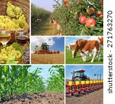 Agriculture - collage, food production - corn field, wheat harvest, tractor sowing, apple, cows on pasture, wine and grapes - stock photo