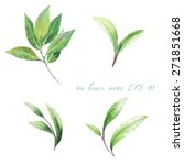 Stock vector green tea leaves on a white background vector watercolor 271851668