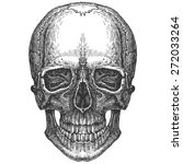 skull on a white background.... | Shutterstock . vector #272033264
