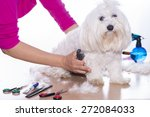 Stock photo canine hair court 272084033