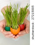 Spring concept - grass sprouting from colorful easter eggs in woman hands - stock photo