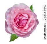 Stock photo rose isolated on white background 272164943