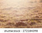 Dry Grass Field Pasture In...