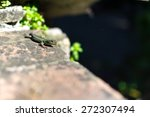 lizard sitting on the wall | Shutterstock . vector #272307494