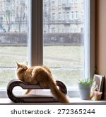 cat looking through the window... | Shutterstock . vector #272365244