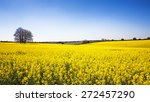 A Panorama Of A Field Of Yello...