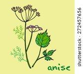 aromatic herbs  anise   Shutterstock .eps vector #272457656