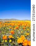 springtime in california ... | Shutterstock . vector #272510480