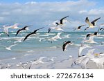 A Large Group Of Seagulls...