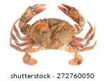 Raw Soft Shell Crab Isolated O...