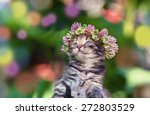 Stock photo cute kitten crowned with a chaplet of clover 272803529