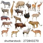 collection of africa animals... | Shutterstock . vector #272843270