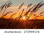 Grass At Sunset With Strong...