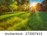 sunlight in green coniferous... | Shutterstock . vector #273007613