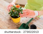 Stock photo people gardening flower planting and profession concept close up of woman or gardener hands 273022013