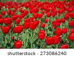 large group of red tulips in... | Shutterstock . vector #273086240