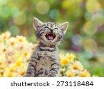 Cute Little Meowing Kitten In...