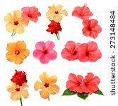 collection of colored hibiscus... | Shutterstock . vector #273148484