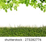 Green Leaves And Green Hedge...