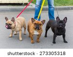 Three Domestic Dogs French...