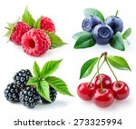 berries collection. raspberry ... | Shutterstock . vector #273325994