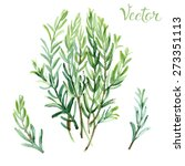 rosemary painted with... | Shutterstock .eps vector #273351113