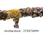 Lichen On A Tree Branch...