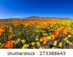 springtime in california ... | Shutterstock . vector #273388643
