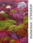 Colorful Mystical Landscape...