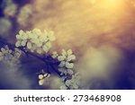 Vintage Photo Of Tree Flower...