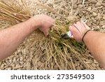 pruning of garden plants | Shutterstock . vector #273549503