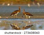 black stork in natural habitat... | Shutterstock . vector #273608060