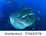 whale shark with mouth open | Shutterstock . vector #273630278