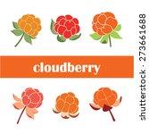 cloudberry. vector illustration. | Shutterstock .eps vector #273661688