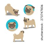 pug dog face and postures | Shutterstock .eps vector #273747836