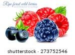 ripe wild berries for tea pack... | Shutterstock .eps vector #273752546