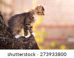 Stock photo small fluffy kitten sitting in a tree 273933800