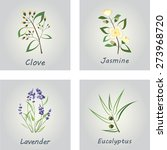 collection of herbs . labels... | Shutterstock . vector #273968720